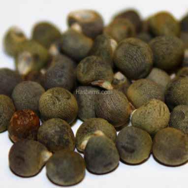 Bamya (Okra) Planting Seeds 15g